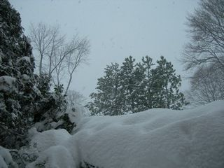 122008_winterwindow5
