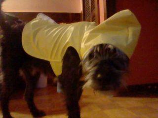 2010_victors_raincoat