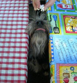 2010_picnictable