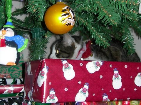 Jingly Cat