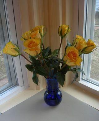2011_yellowrose