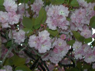 20110505_flowers