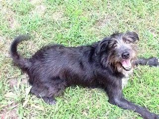 2011_happydog