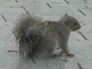 WetSquirrel