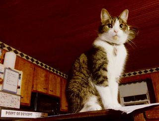 Programmer Cat1