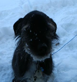 2013_snowdog